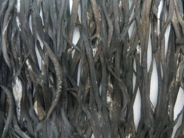 Alga biologiche Spaghetti di Mare Midzu - 1 Kg