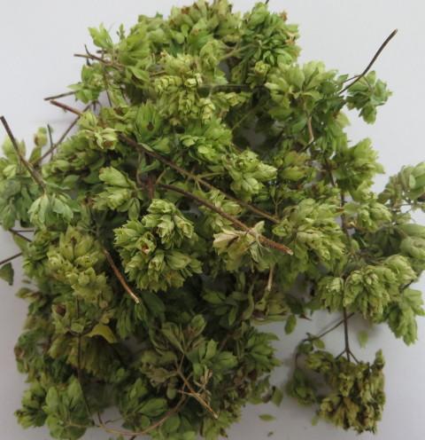 Origano biologico Midzu - 40 gr
